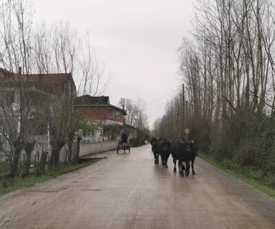 Şehirlerden göç edenler köylerde yaşlı nüfusu risk altında bırakıyor