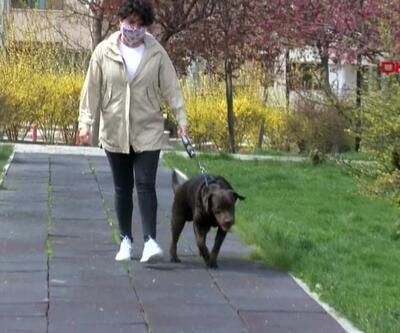 Evcil hayvanlarda hijyen sorunu
