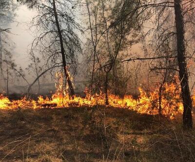 Bursa'da ormanlık alanda çıkan yangın kısa sürede söndürüldü