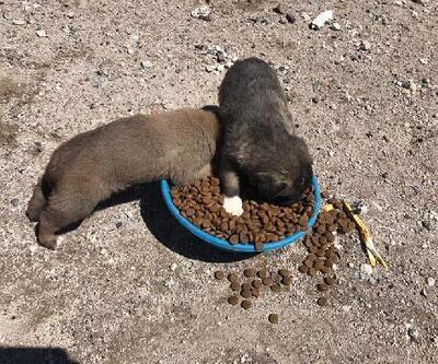 Çiftlik ilçesinde sokak hayvanları beslendi