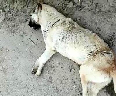 Yol kenarında duran köpek, tüfekle vurularak öldürüldü