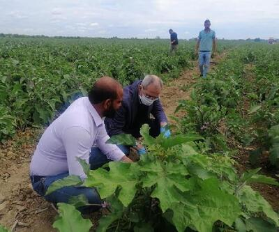 Belediye çiftçilerden satın aldığı mahsulleri vatandaşlara ücretsiz olarak dağıtıyor