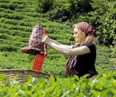 Çay hasadında ayda 7 bin 500 TL kazanç var, işçi yok