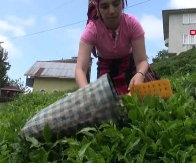 Çay hasadı için eylem planı hazır