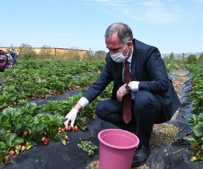İnegöl'ün ilk çilek hasadını İnegöl Belediye Başkanı Taban yaptı