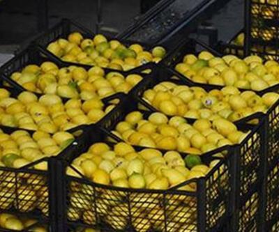 Bakan Pakdemirli açıkladı! 10 bin ton limon ihracatına izin