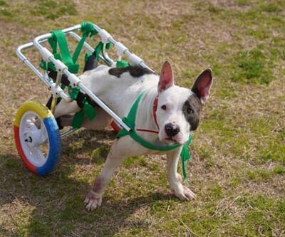 """Hayat Tamircisi'nde bu kez engelli köpek """"Bella"""" nın hikayesi ekrana geliyor"""