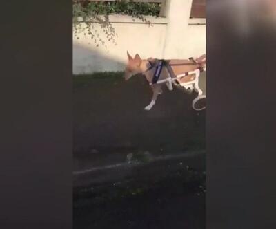 Hayvanlar için yürüteçler yapıyor