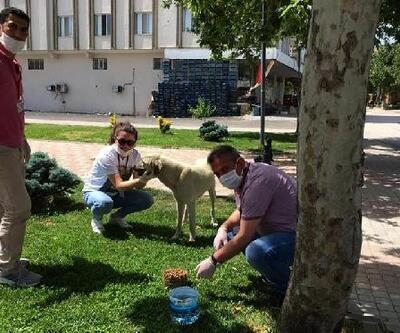 Nurdağı'nda sokak hayvanları unutulmadı