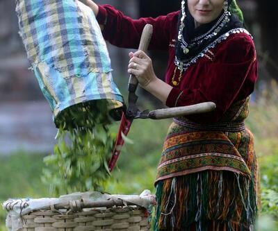 Doğu Karadeniz'de yaş çay hasadı başladı