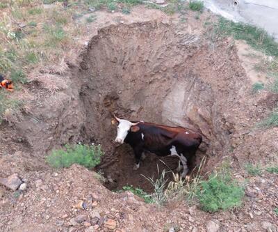 İstanbul'da inek kurtarma operasyonu