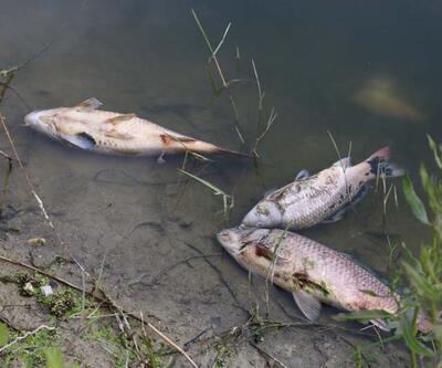 Toplu balık ölümleri sonrası inceleme başlatıldı