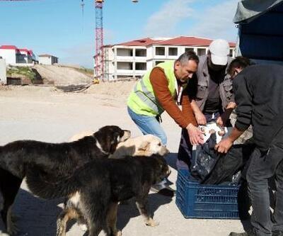 Sokağa çıkma kısıtlamasında Bolu Belediyesi sokak hayvanlarını besledi