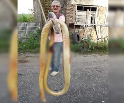 Dev yılan torunlarına saldırdı! Çığlıkları duyar duymaz tüfeğine sarıldı
