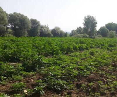 Diyarbakır'da rekor uyuşturucu ele geçti