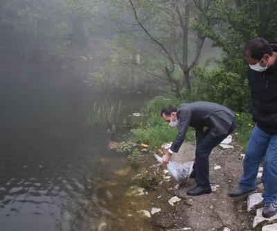 Domaniç'te 15 bin adet yavru sazan sulara bırakıldı