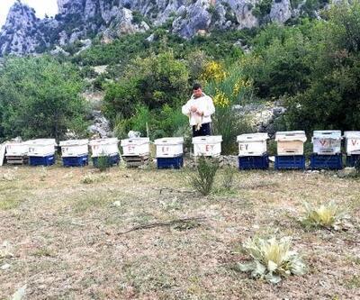 Arı kovanlarını çaldılar, jandarma ekipleri yakaladı