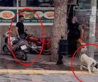 Köpeğe sopayla şiddet uygulayan kişiye barınağa gitme cezası