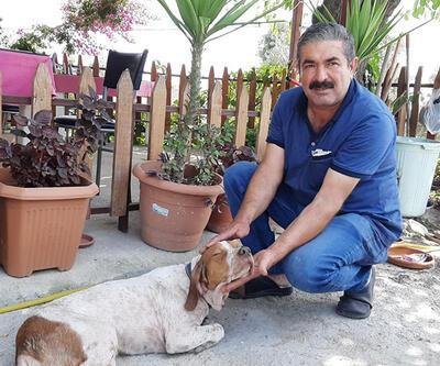 Son dakika: Kredi çekip yaralı köpeği tedavi ettirdi | Video