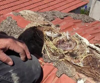 Son dakika: Çatıda yavruları gören usta tamiratı erteledi | Video
