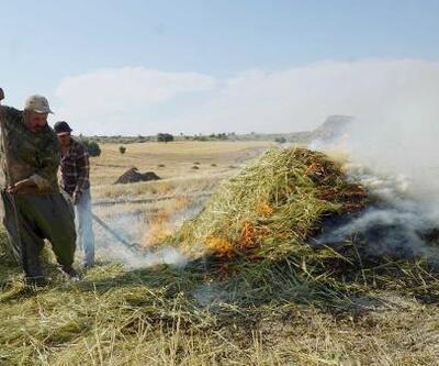 Gölbaşı'nda firiklik buğday hasadı başladı