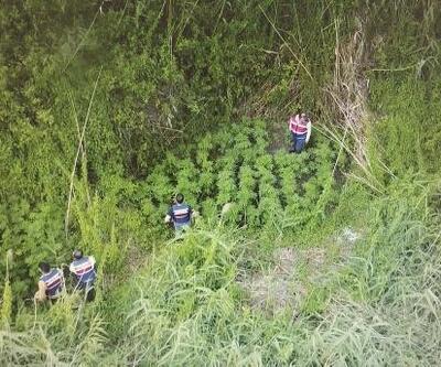 Ağyatan Gölü kenarında 5 bin kök kenevir bitkisi ele geçirildi