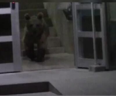 Boz ayılar ilçe merkezine indi