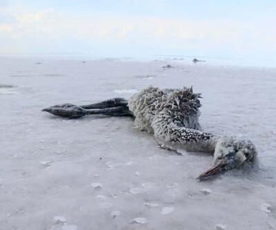 Son dakika: Tuz Gölü'nde allı turnaların esrarengiz ölümü