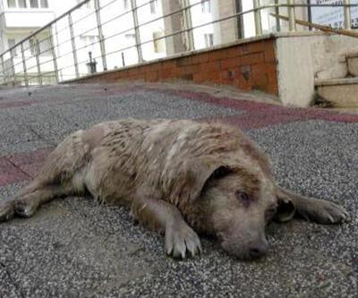 Suya kapılan köpeği vatandaşlar kurtardı