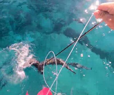 Son dakika... Çekim yaparken balon balığı parmağını koparıyordu