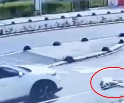 Son dakika: Vicdansızlık kamerada! Yolda uzanan köpeği ezdi | Video