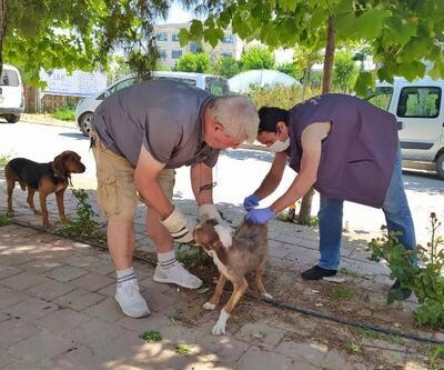 Gelibolu'da av köpeklerine kuduz aşısı yapıldı