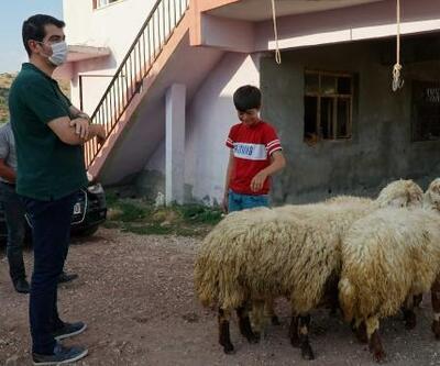 Kaymakam dan, keçileri ölen küçük Barış'a hediye kuzu