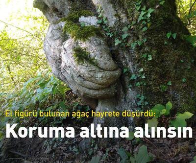 Gövdesinde el figürü olan ağacın koruma altına alınmasını istedi