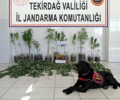 Tekirdağ'da çiftlikte uyuşturucu operasyonu