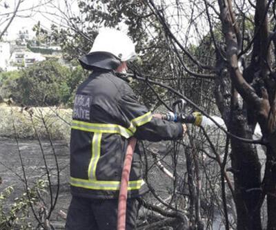 Bodrum'da zeytinlikte çıkan yangın söndürüldü