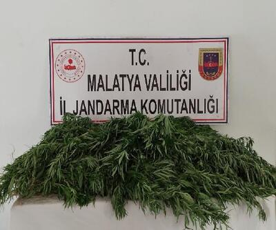 Malatya'da, kenevir ekimine 2 gözaltı