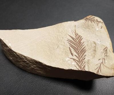 Son dakika... Antalya ve Konya'da 500 milyon yaşında iki fosil bulundu