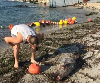 Tekirdağ'da ölü yavru yunus karaya vurdu