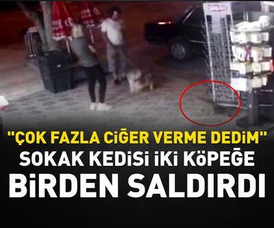 Sokak kedisi iki köpeğe birden saldırdı