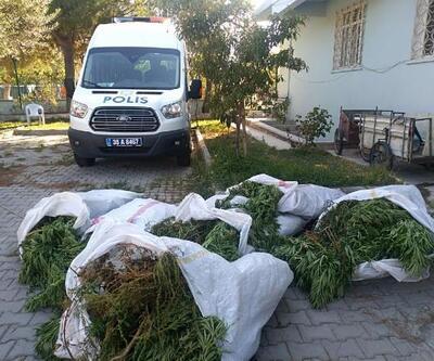 Pamuk tarlasında Hint keneviri yetiştiren çiftçi tutuklandı