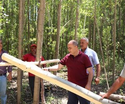 Kavak ağacı yetiştirip satarak, ek gelir elde ediyorlar