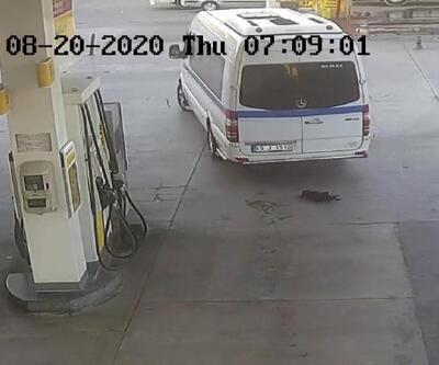 Son dakika... Yavru köpeği ezen sürücü, adli kontrolle serbest bırakıldı