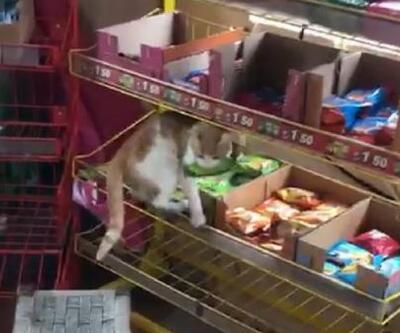 Son dakika... Bakkal, sokak kedisinin raftan kek alıp, yeme anını görüntüledi | Video