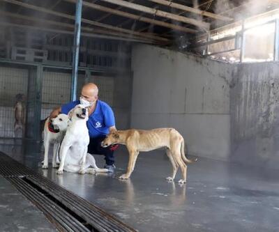 Çöl sıcaklarına karşı sokak hayvanları için önlem alındı