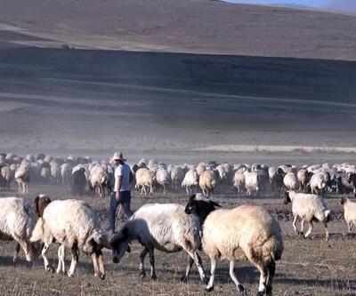 Çobanlık yaparken tıbbı kazandı! Tam altınla ödüllendirildi