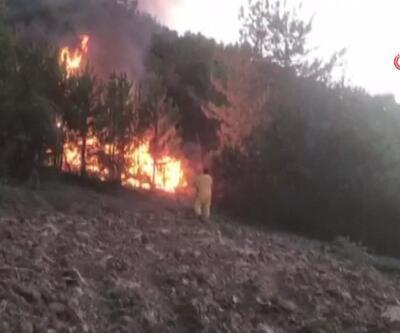 Nallıhan'da yine orman yangını | Video