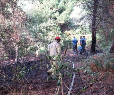 Son dakika... Beykoz'da orman yangını