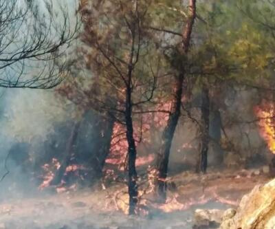 Son dakika.. Milas Ören'de orman yangını