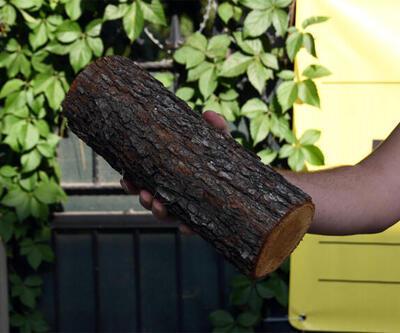 Halil Sezai'yi elindeki odun yaktı